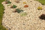 Gold stone mulch